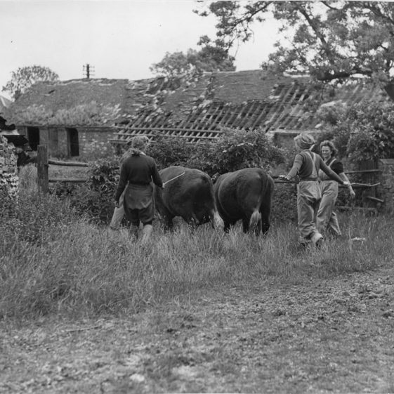 Land Army Girls working on local farms. (1)