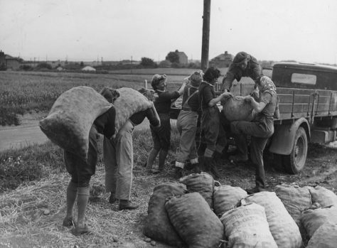 Loading Potatoes at a Farm at Nelson Park. c1942