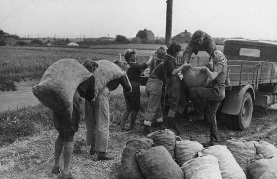 Land Army girls loading potatoes. c1942