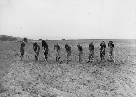 Land Army girls hoeing a Field