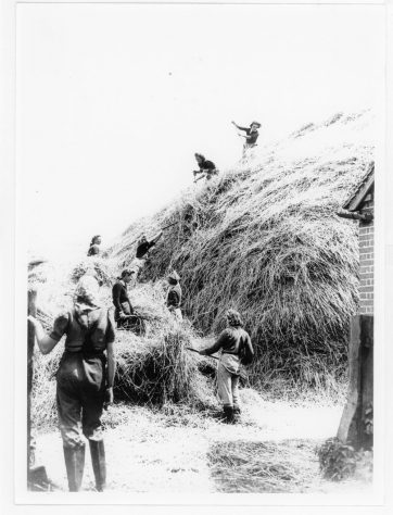 Land Army girls building a haystack at Reach Court Farm. c1942