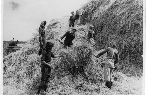 Land Army girls building a haystack