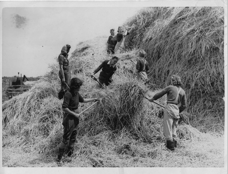 Land Army girls building a haystack. 1940s