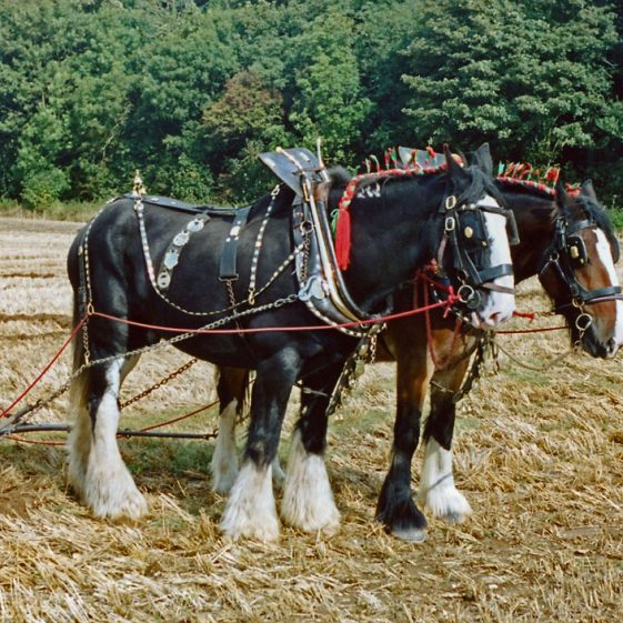 Photographs taken during a Ploughing Match at East Valley Farm. 25 September 2001