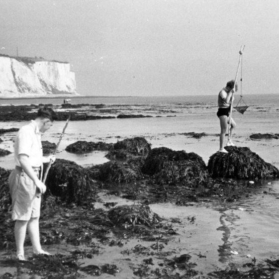 Denoon family prawning in St Margaret's Bay, c.1947