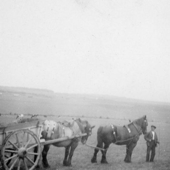 Working horses on Bockhill Farm. c1930