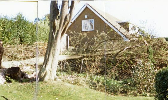 The garden of 'Captain Jan', Granville Road, after the Great Storm of October 1987.