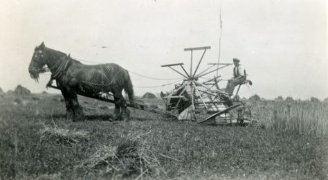 Reaper binder at Bockhill Farm. Undated