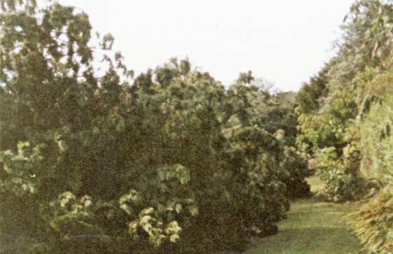 Salisbury Road after the Great Storm of 1987