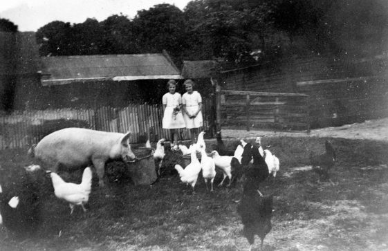 Bockhill Farm: Two small girls watching pigs and chickens feed. 1920/30s