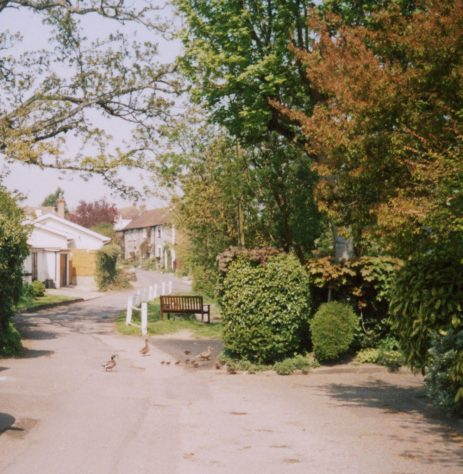 Chapel Lane pond and ducks. April 2004