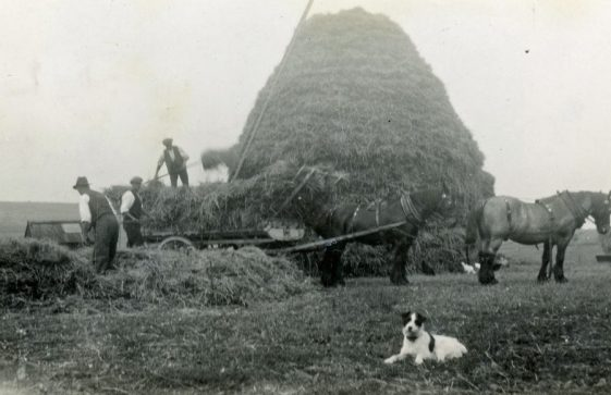 Building straw stacks at Bockhill Farm. Undated