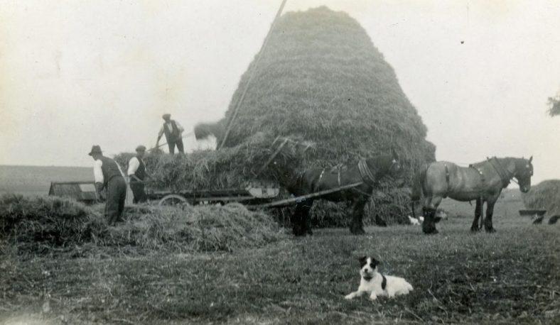 Building straw stacks at Bockhill Farm. Undated