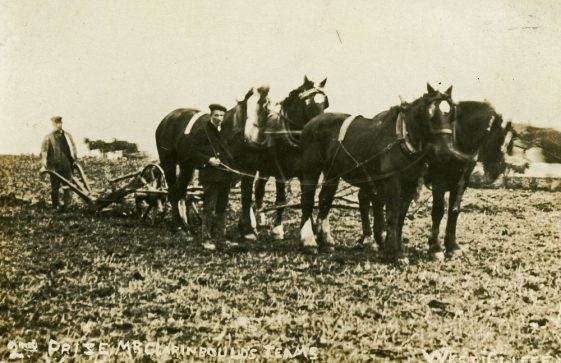 Mr Claringbould and his horse drawn plough team at Westcliffe