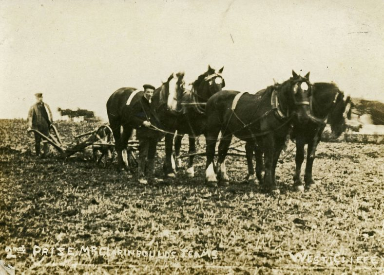 Mr Claringbould and his team at the Ploughing Match, Westcliffe. c1920