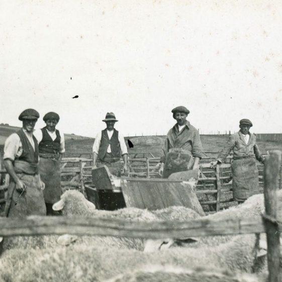 Sheep Dipping at Bockhill Farm. Undated