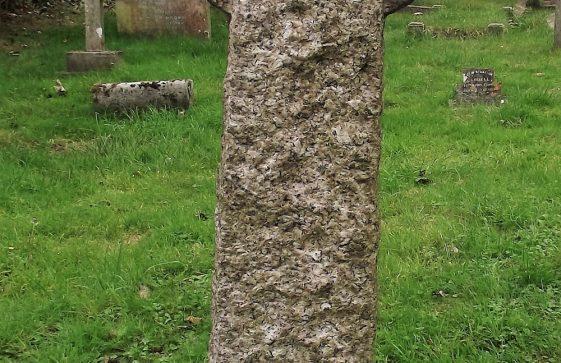 Gravestone of HAYWARD Marianne 1924; Henry HAYWARD 1928; Winifred M HAYWARD 1958