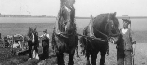 Working horses at Bockhill Farm. Undated
