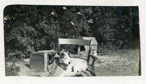 Bockhill Farm dog Pincher
