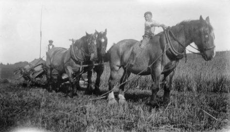 Harvesting at Bockhill Farm. c1928