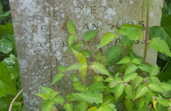 Gravestone of FINNIS John Charles 1985