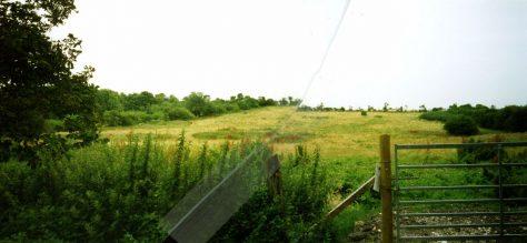 Field off Droveway Gardens
