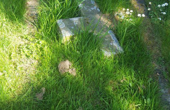 Gravestone of CLARK Eliza Selina 1886