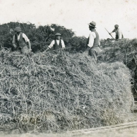 Stack making at Bockhill Farm. Undated