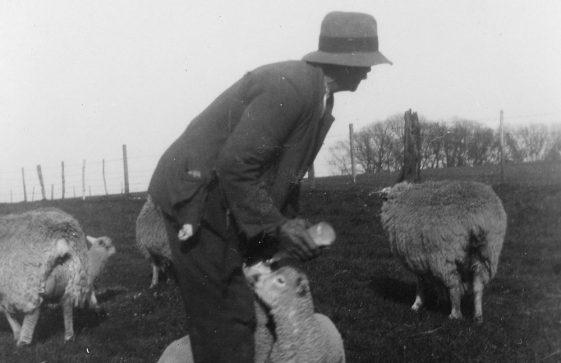 Lambing season at Bockhill Farm. Undated